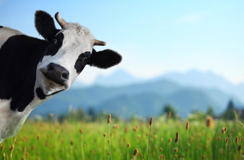 Em tempo de vacas gordas, todos querem anunciar; em tempos de crise todos devem anunciar